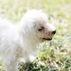 Laremy-Dog-SantaFe-005