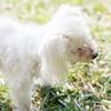 Laremy-Dog-SantaFe-004