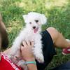 Laremy-Dog-SantaFe-015