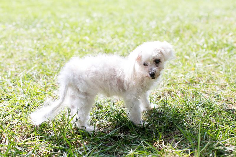 Laremy-Dog-SantaFe-001