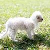 Laremy-Dog-SantaFe-002