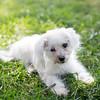 Laremy-Dog-SantaFe-038