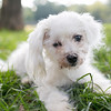 Laremy-Dog-SantaFe-040