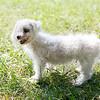 Laremy-Dog-SantaFe-003