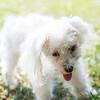 Laremy-Dog-SantaFe-007