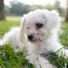 Laremy-Dog-SantaFe-043