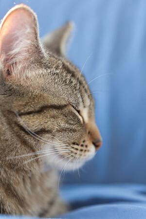 Floyd&Kitties-Spring2015-040