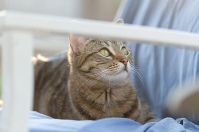 Floyd&Kitties-Spring2015-037