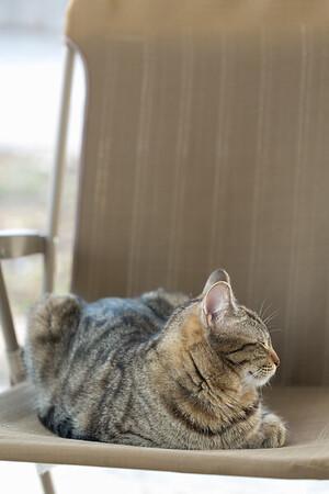 Floyd&Kitties-Spring2015-034