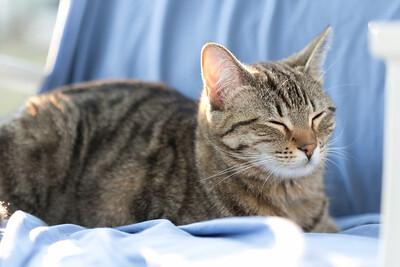 Floyd&Kitties-Spring2015-038
