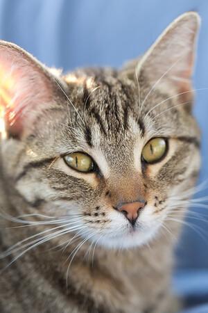 Floyd&Kitties-Spring2015-041