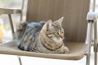 Floyd&Kitties-Spring2015-032