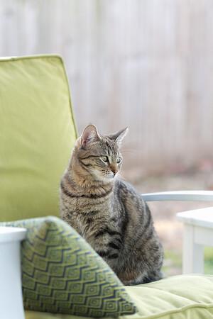 Floyd&Kitties-Spring2015-036