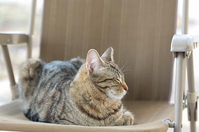 Floyd&Kitties-Spring2015-033
