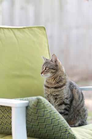 Floyd&Kitties-Spring2015-035