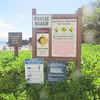 Maui-Hawaii-Honeymoon-373