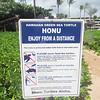 Maui-Hawaii-Honeymoon-372