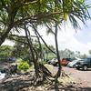 Maui-Hawaii-Honeymoon-258