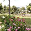 2017July-ChiangMai-Phuket-Thailand-0988