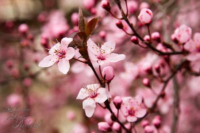 Week 11- Spring Break