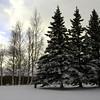 Week 5 - Winter