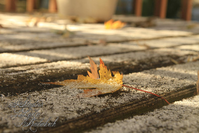 "Week 44-Fall ""First Snow"""
