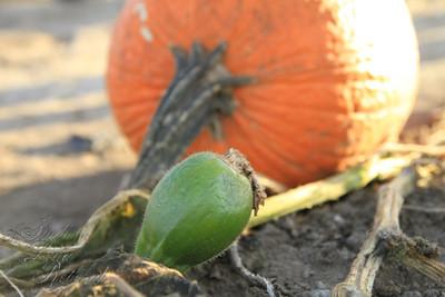 """Week 43-Pumpkins """"Dreaming Big"""""""