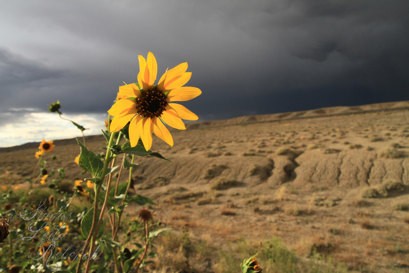 """Week 28-Summer Colors """"Beauty in the Storm"""""""