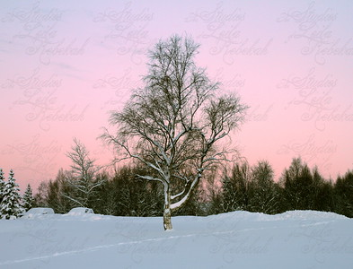Week 1-Winter