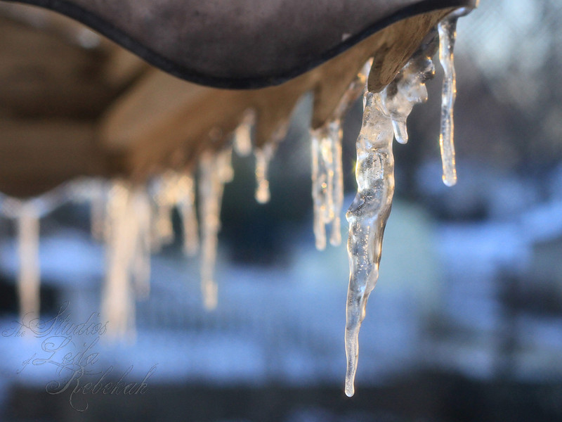 Week 2-Winter<br /> Icicles in the morning sun