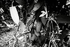 Une fleur de vanille dans la plantation de Lues Rokuad à Mu. Lifou/Iles Loyauté/Nouvelle-Calédonie
