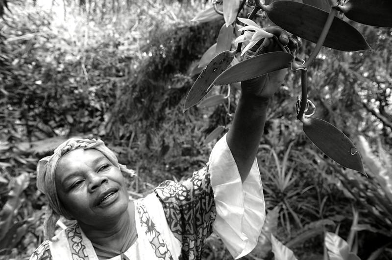 Janine Bole en train d'examiner une fleur de vanille dans sa plantation de Mucaweng. Lifou/Iles Loyauté/Nouvelle-Calédonie