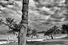 Poteau sculpté sur le site d'Ahmelewedr. Lifou/Iles Loyauté/Nouvelle-Calédonie