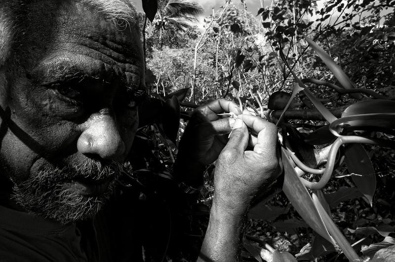 Lues Rokuad en train de féconder une fleur de vanille dans sa plantation de Mu. Lifou/Iles Loyauté/Nouvelle-Calédonie