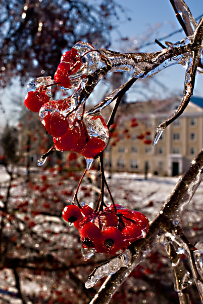 Ice Storm. Schenectady, NY. 2008.