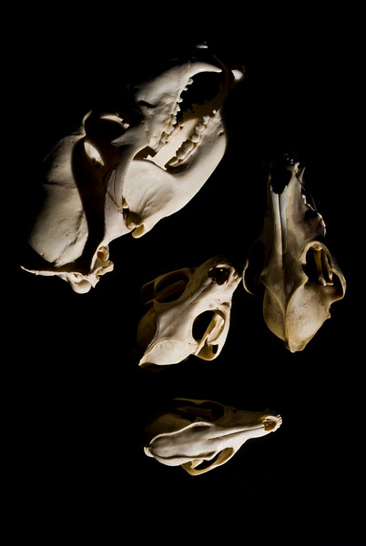 Skulls. 2008.