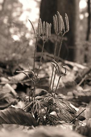 Plant. 2004.