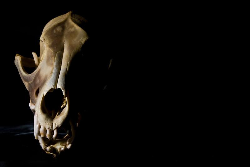Dead Coyote. 2008.