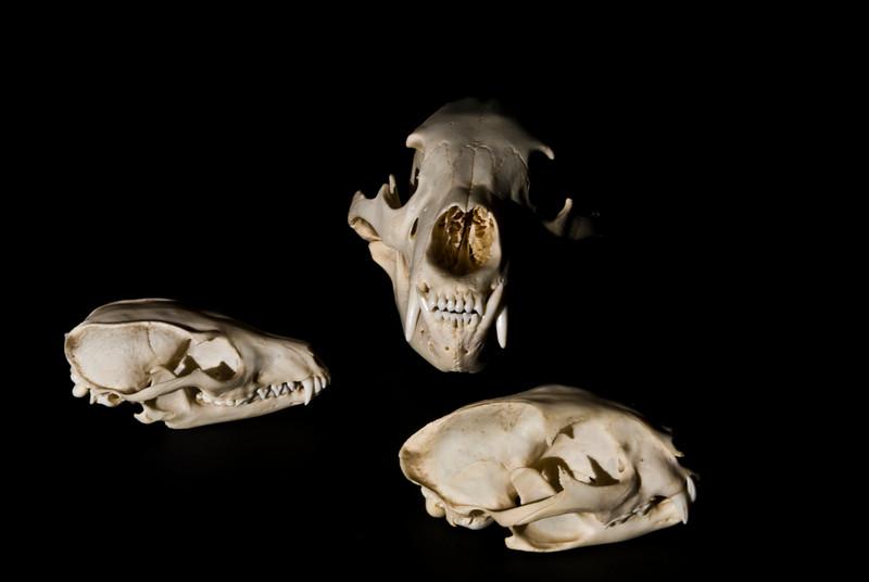 Skulls 2. 2008.