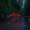 Stegosaurus in Fern Canyon