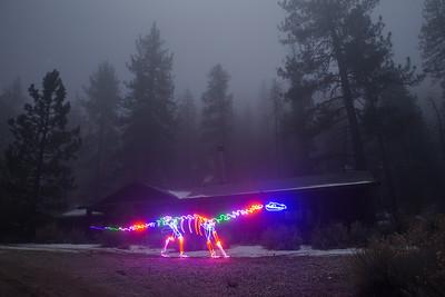 Winter Fog Dinosaur