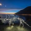 Coastal Triceratops
