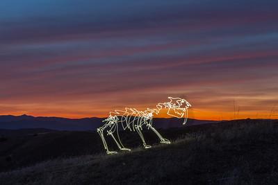 Sunset Sabretooth