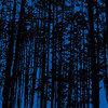 Trees dark blue