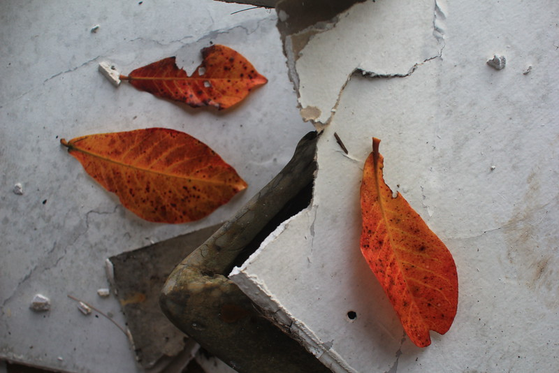 After-life of the tree leaves