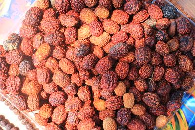 Thai Rudraksha,   रूद्राक्ष or Elaeocarpus ganitrus