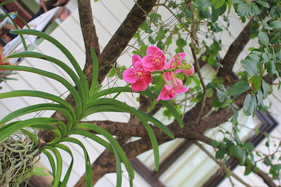 "orchid blossoming in a front of ""MoonLover Bungalow"" at ""Khao Tam Sanctuary"""