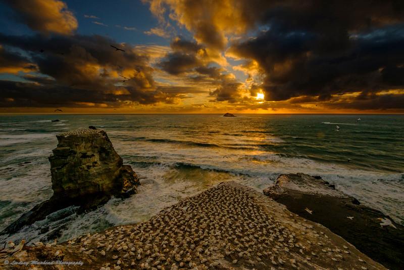 Muriwai setting Sun