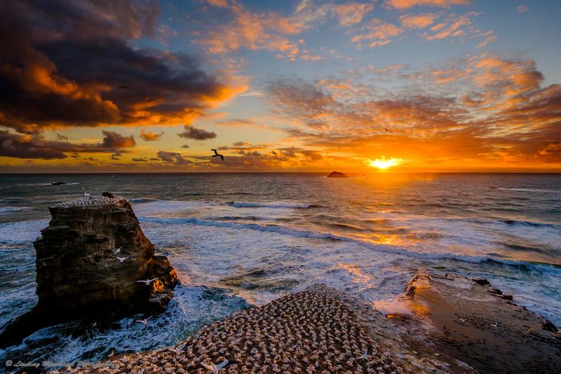 Sunset Muriwai