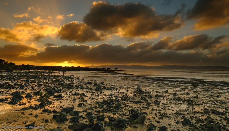 Evening Manukau Harbour